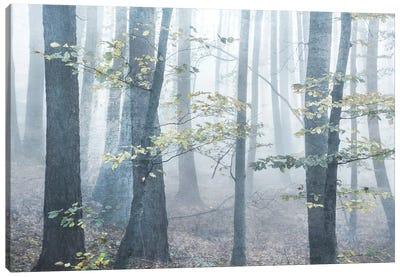 Chalky Misty Canvas Art Print
