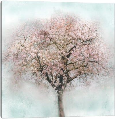 Awakening II Canvas Art Print