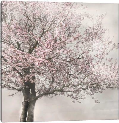 Blush in the Wind I Canvas Art Print
