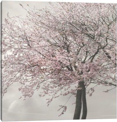Blush in the Wind II Canvas Art Print