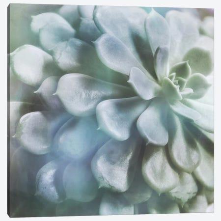 Soft Succulent I 3-Piece Canvas #IWE47} by Irene Weisz Canvas Wall Art