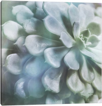 Soft Succulent I Canvas Art Print