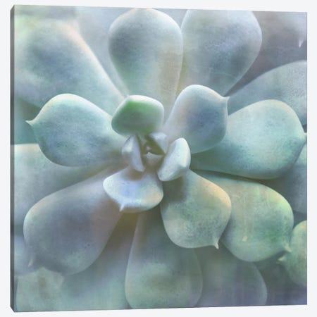 Soft Succulent II 3-Piece Canvas #IWE48} by Irene Weisz Art Print