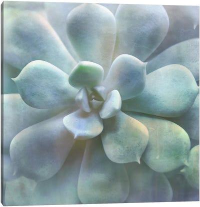 Soft Succulent II Canvas Art Print