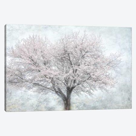 A Feel of Spring II Canvas Print #IWE51} by Irene Weisz Canvas Wall Art