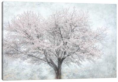 A Feel of Spring II Canvas Art Print