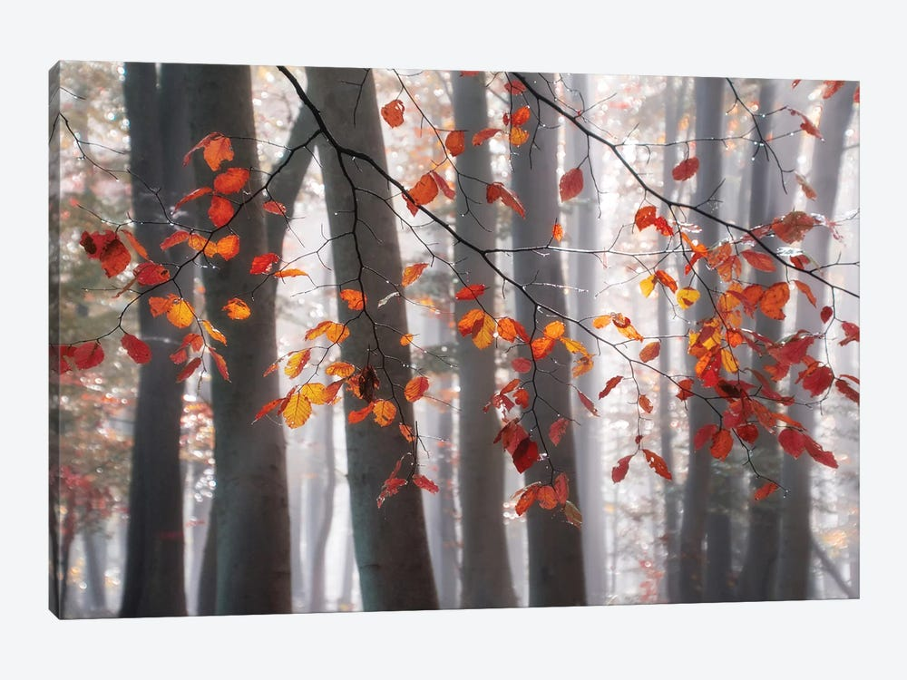 Falling Moments by Irene Weisz 1-piece Canvas Wall Art