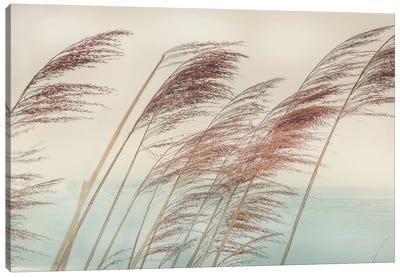 Windy II Canvas Art Print