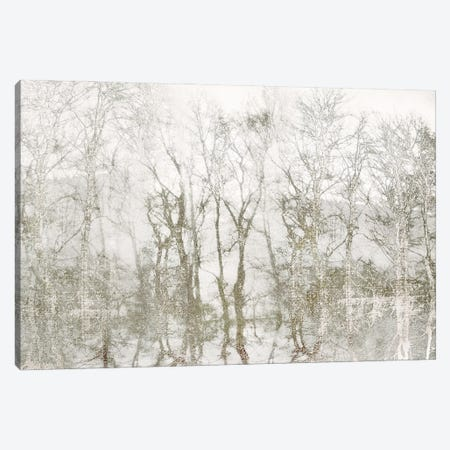 Shimmering Trees Canvas Print #IWE69} by Irene Weisz Art Print