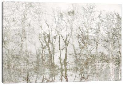 Shimmering Trees Canvas Art Print