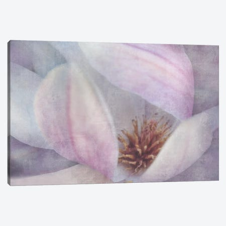 Magnolia Melody II Canvas Print #IWE7} by Irene Weisz Canvas Art