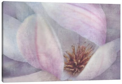 Magnolia Melody II Canvas Art Print