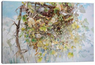 Sparrows In Grape Bush Canvas Art Print