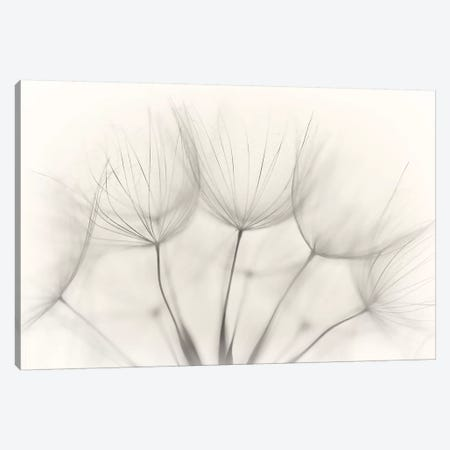 No title 3-Piece Canvas #JAA1} by Jakob Arnholtz Canvas Print
