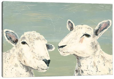 Bashful Sheep I Canvas Art Print
