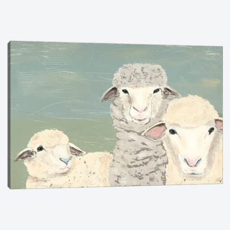 Bashful Sheep II Canvas Print #JAD26} by Jade Reynolds Canvas Art