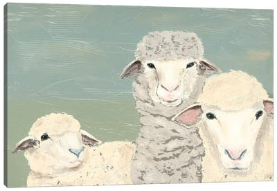 Bashful Sheep II Canvas Art Print