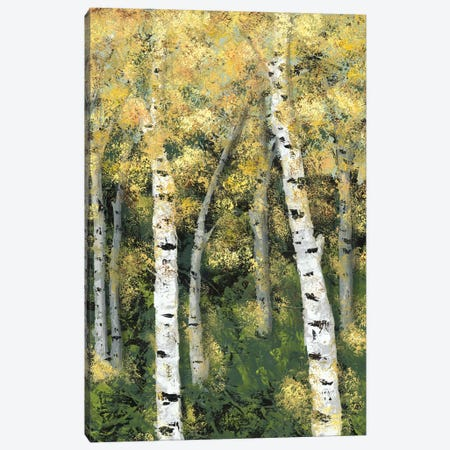 Birch Treeline III Canvas Print #JAD55} by Jade Reynolds Canvas Art Print