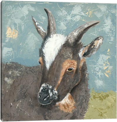 Farm Life-Grey Goat Canvas Art Print