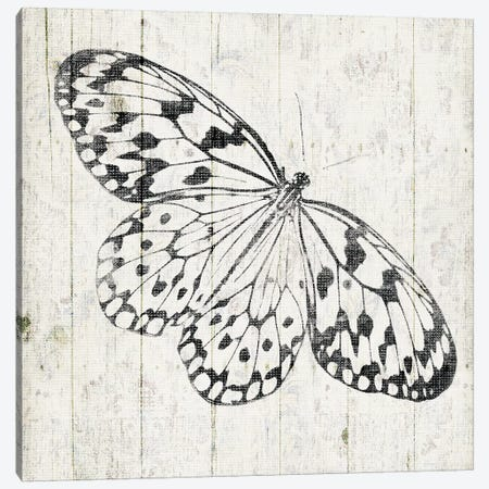 Butterfly Canvas Print #JAG39} by Jace Grey Canvas Art Print