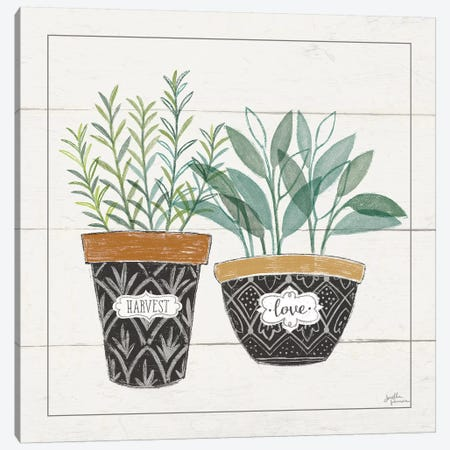Fine Herbs IV Love Canvas Print #JAP49} by Janelle Penner Art Print