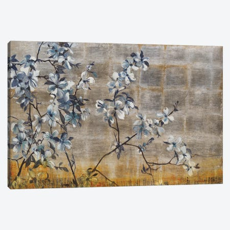 Silver Dogwood Canvas Print #JAR112} by Liz Jardine Canvas Print