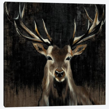 Young Buck Canvas Print #JAR137} by Liz Jardine Canvas Artwork