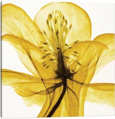 An Open Heart (Yellow) Canvas Art Print