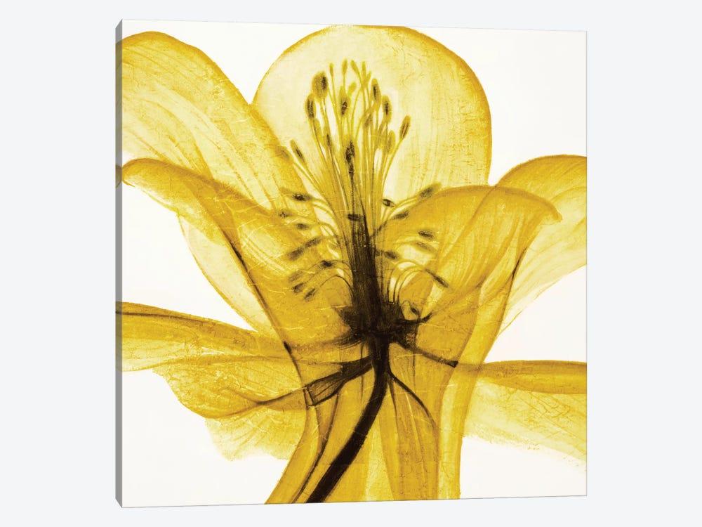 An Open Heart (Yellow) by Liz Jardine 1-piece Canvas Art