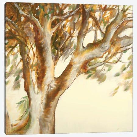Study of Form Canvas Print #JAR307} by Liz Jardine Canvas Art Print