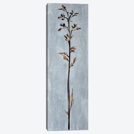 Cool Botanicals III Canvas Print #JAR32} by Liz Jardine Canvas Art