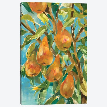 In A Pear Tree Canvas Print #JAR345} by Liz Jardine Art Print
