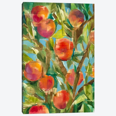 Just Peachy Canvas Print #JAR346} by Liz Jardine Canvas Art Print
