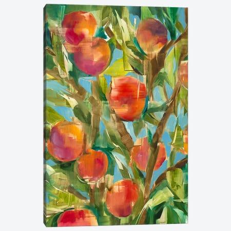 Just Peachy Canvas Print #JAR346} by Liz Jardine Canvas Art Print