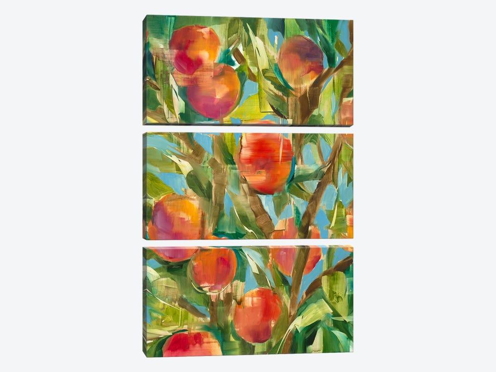 Just Peachy by Liz Jardine 3-piece Canvas Wall Art