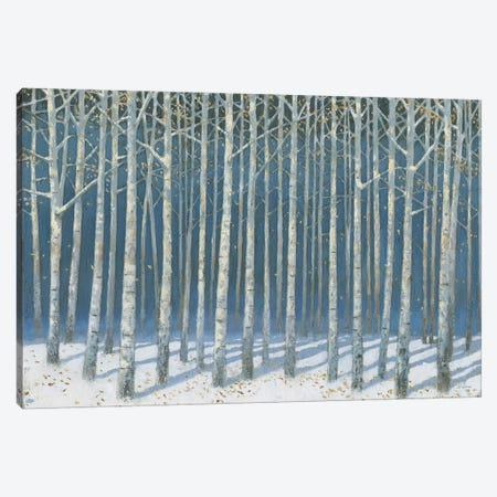 Shimmering Birches Canvas Print #JAW117} by James Wiens Canvas Art