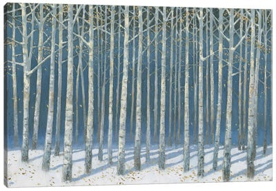 Shimmering Birches Canvas Art Print
