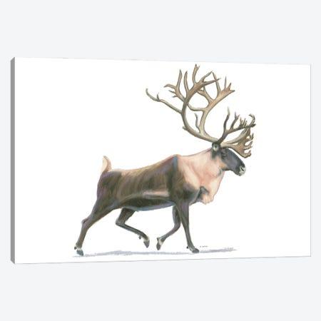 Northern Wild IV Canvas Print #JAW140} by James Wiens Canvas Art