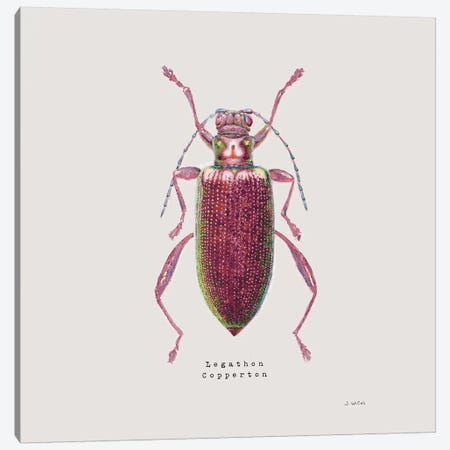 Adorning Coleoptera VI Sq Claret Canvas Print #JAW18} by James Wiens Canvas Print