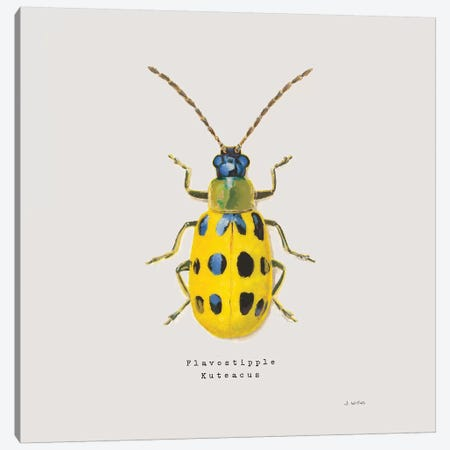 Adorning Coleoptera VII Sq Golden Canvas Print #JAW19} by James Wiens Art Print