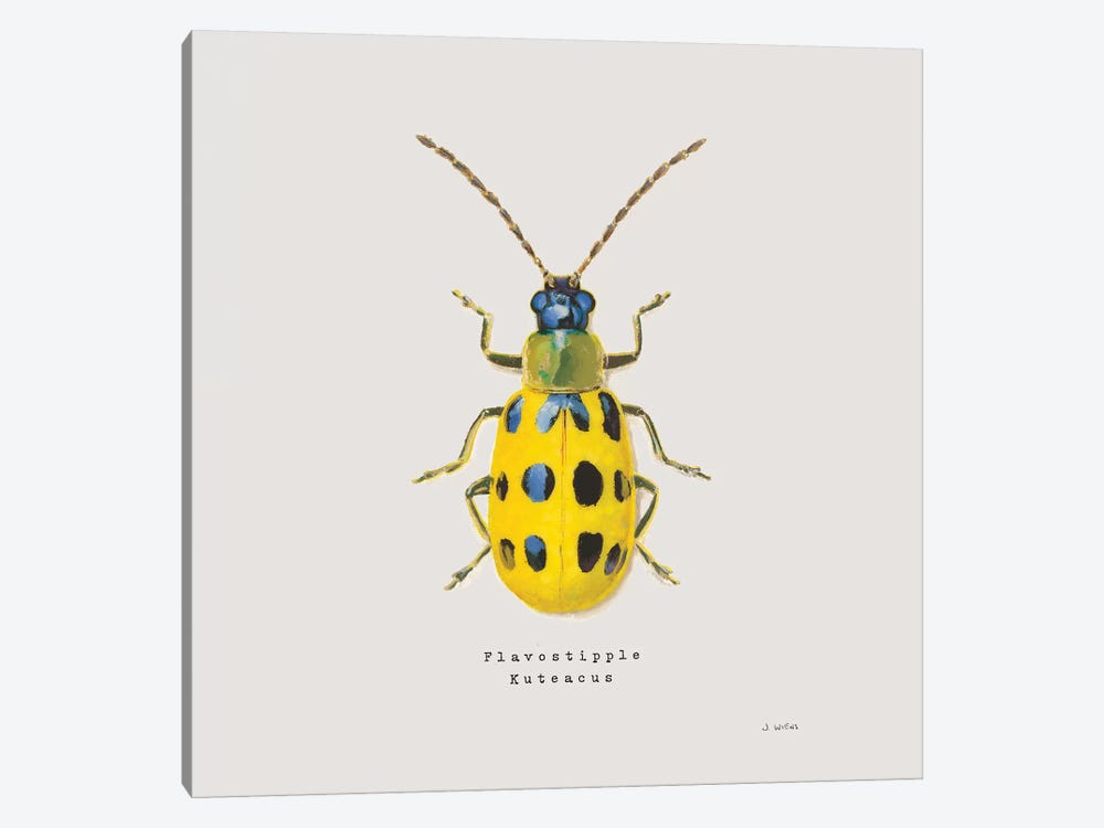 Adorning Coleoptera VII Sq Golden by James Wiens 1-piece Canvas Print