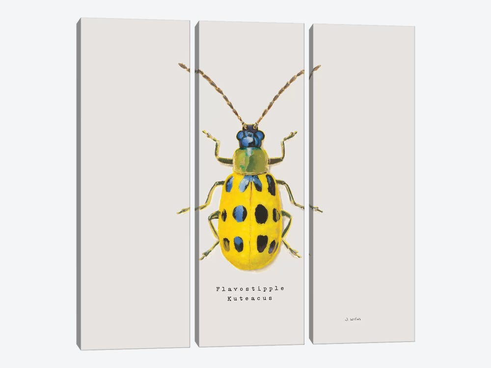 Adorning Coleoptera VII Sq Golden by James Wiens 3-piece Canvas Art Print