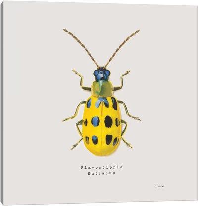 Adorning Coleoptera VII Sq Golden Canvas Art Print
