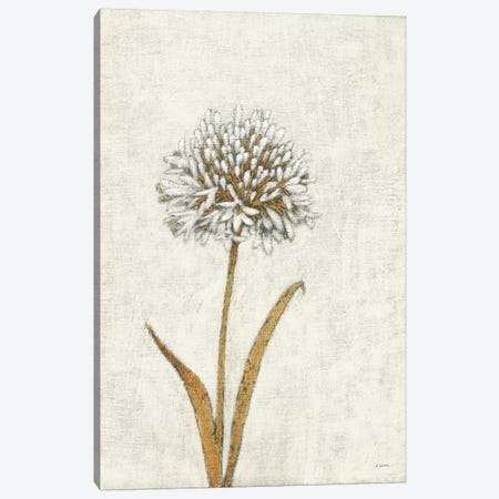 Shimmering Summer I Ivory Canvas Print #JAW52} by James Wiens Art Print