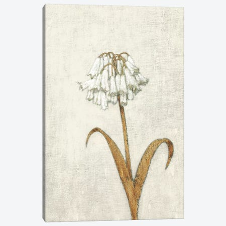 Shimmering Summer II Ivory Canvas Print #JAW54} by James Wiens Canvas Art