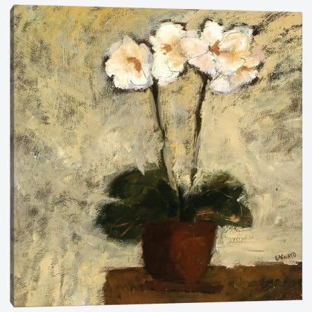 Orchid Textures I Canvas Print #JBA34} by Judi Bagnato Canvas Art