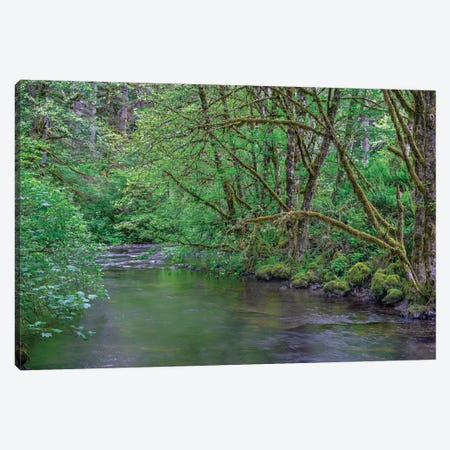 Oregon. Silver Falls State Park, spring flora, primarily maple and red alder Canvas Print #JBG21} by John Barger Canvas Wall Art