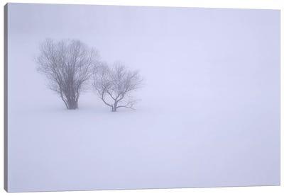 USA, Oregon, Wallowa Lake State Park. Winter snow and fog among small trees. Canvas Art Print