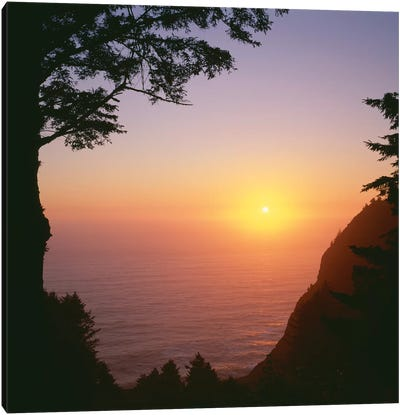 USA, Oregon. Oswald West State Park, summer sunset viewed from below Neahkanie Mountain. Canvas Art Print