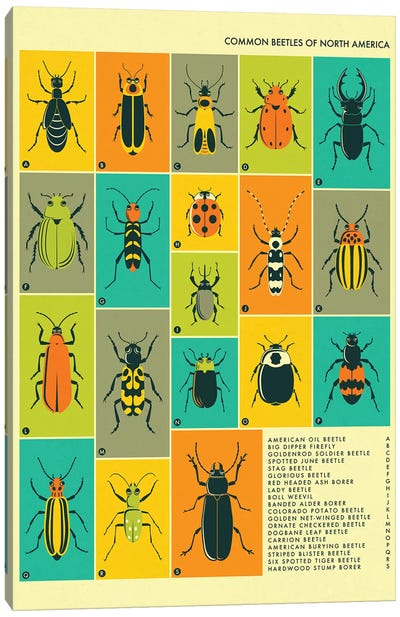 Common Beetles Of North America Canvas Art Print